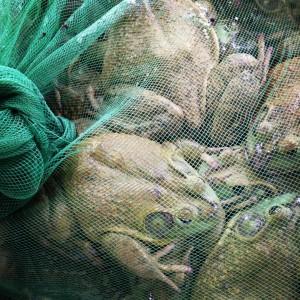 Levende padden op de markt in Shanghai; © Marjan Ippel