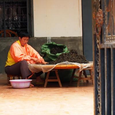 Een vrouw selecteert pu-erh thee in Yunnan, China; © Marjan Ippel